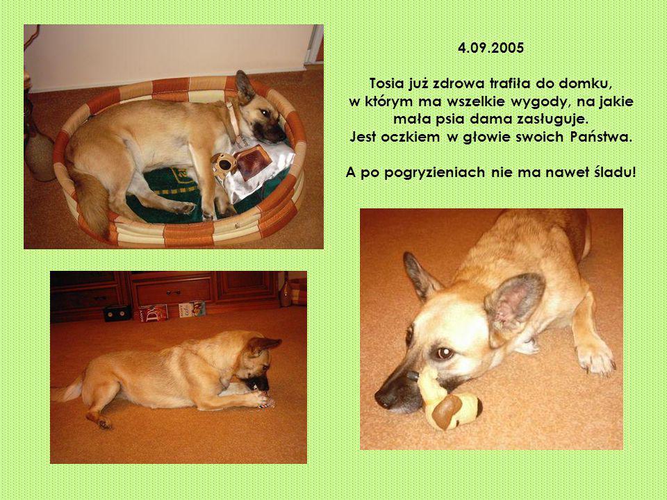 4.09.2005 Tosia już zdrowa trafiła do domku, w którym ma wszelkie wygody, na jakie mała psia dama zasługuje. Jest oczkiem w głowie swoich Państwa. A p