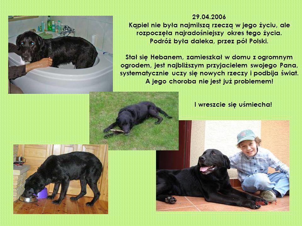 29.04.2006 Kąpiel nie była najmilszą rzeczą w jego życiu, ale rozpoczęła najradośniejszy okres tego życia. Podróż była daleka, przez pół Polski. Stał