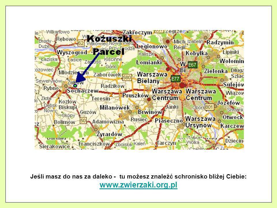 2 Jeśli masz do nas za daleko - tu możesz znaleźć schronisko bliżej Ciebie: www.zwierzaki.org.pl www.zwierzaki.org.pl