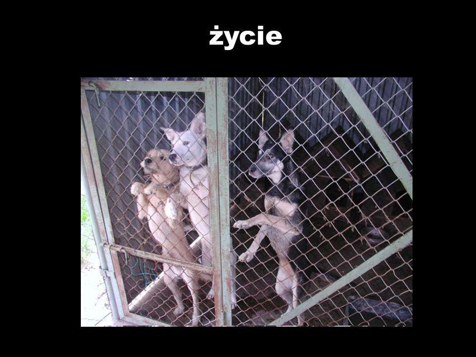 Takich szczęśliwych zakończeń było więcej, ale dużo więcej jest skrzywdzonych psów, które ciągle czekają na odmianę złego losu!