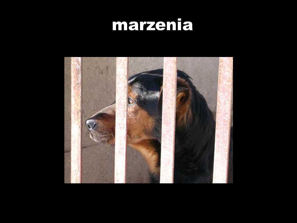 4.09.2005 Tosia już zdrowa trafiła do domku, w którym ma wszelkie wygody, na jakie mała psia dama zasługuje.