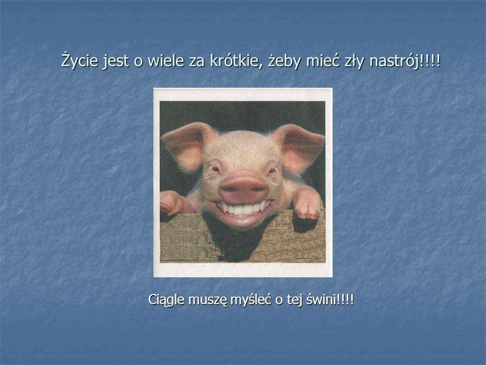 Życie jest o wiele za krótkie, żeby mieć zły nastrój!!!! Ciągle muszę myśleć o tej świni!!!!