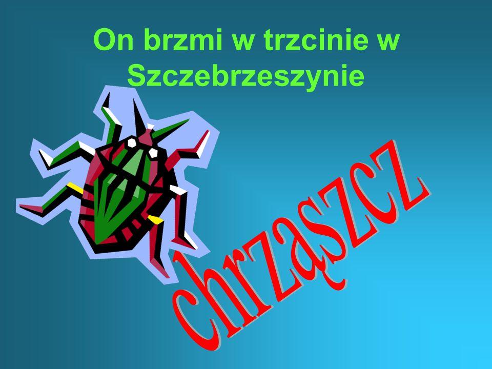 On brzmi w trzcinie w Szczebrzeszynie