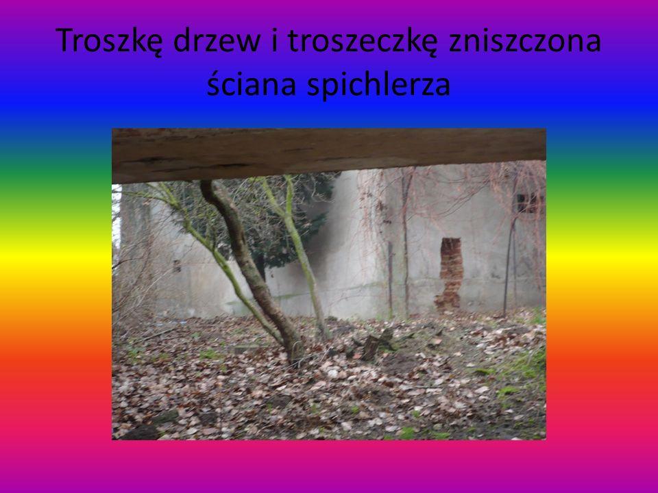 Troszkę drzew i troszeczkę zniszczona ściana spichlerza