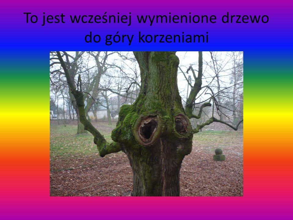 To jest wcześniej wymienione drzewo do góry korzeniami