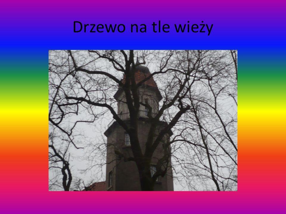 Drzewo na tle wieży