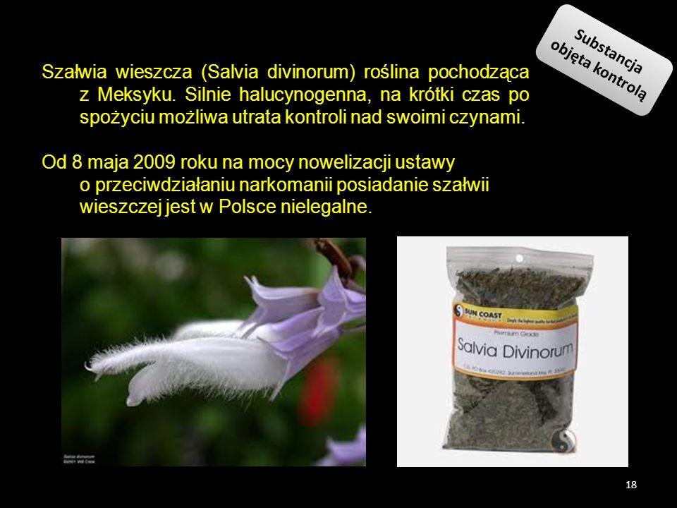 Szałwia wieszcza (Salvia divinorum) roślina pochodząca z Meksyku. Silnie halucynogenna, na krótki czas po spożyciu możliwa utrata kontroli nad swoimi