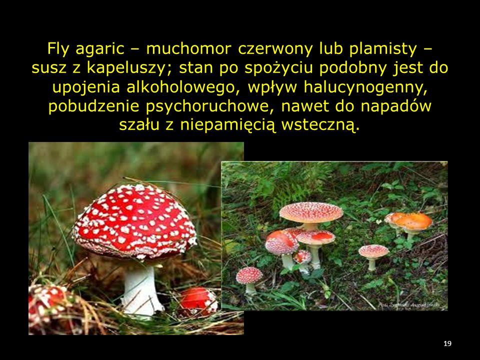 Fly agaric – muchomor czerwony lub plamisty – susz z kapeluszy; stan po spożyciu podobny jest do upojenia alkoholowego, wpływ halucynogenny, pobudzeni