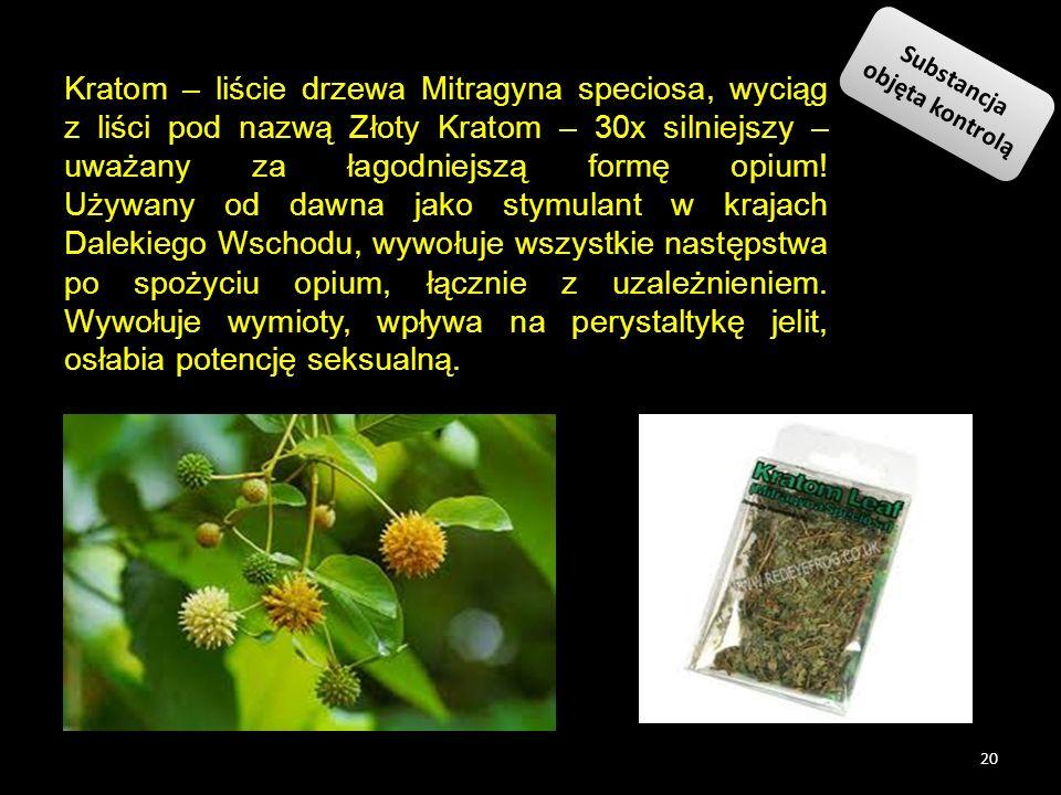 Kratom – liście drzewa Mitragyna speciosa, wyciąg z liści pod nazwą Złoty Kratom – 30x silniejszy – uważany za łagodniejszą formę opium! Używany od da