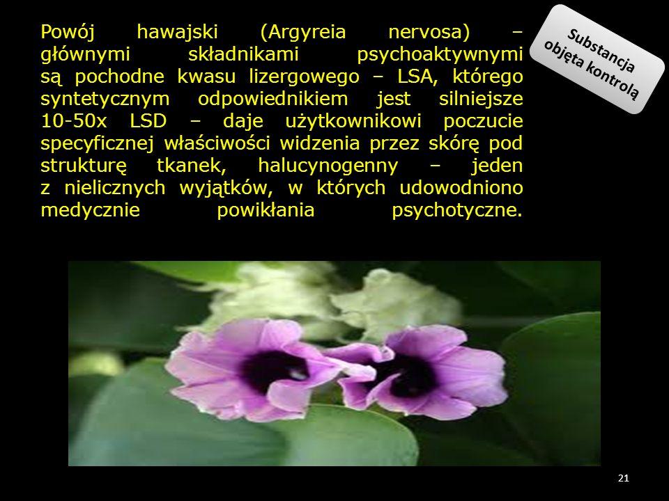 Powój hawajski (Argyreia nervosa) – głównymi składnikami psychoaktywnymi są pochodne kwasu lizergowego – LSA, którego syntetycznym odpowiednikiem jest