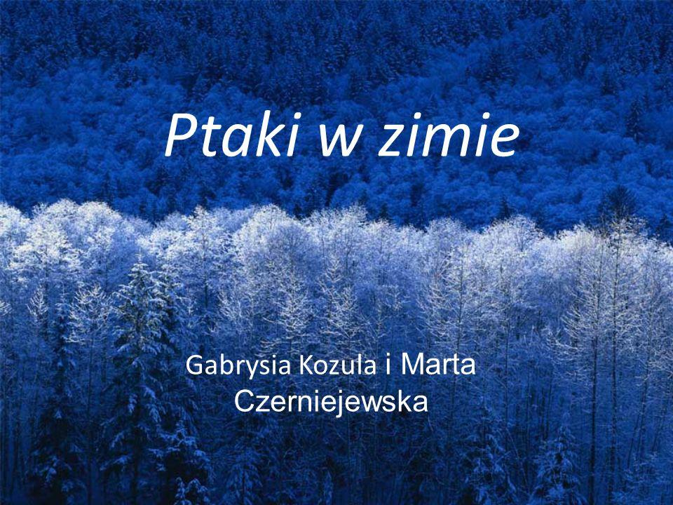Ptaki w zimie Gabrysia Kozula i Marta Czerniejewska