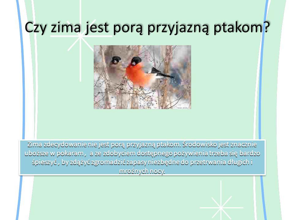 Czy zima jest porą przyjazną ptakom? Zima zdecydowanie nie jest porą przyjazną ptakom. Środowisko jest znacznie uboższe w pokaram, a ze zdobyciem dost