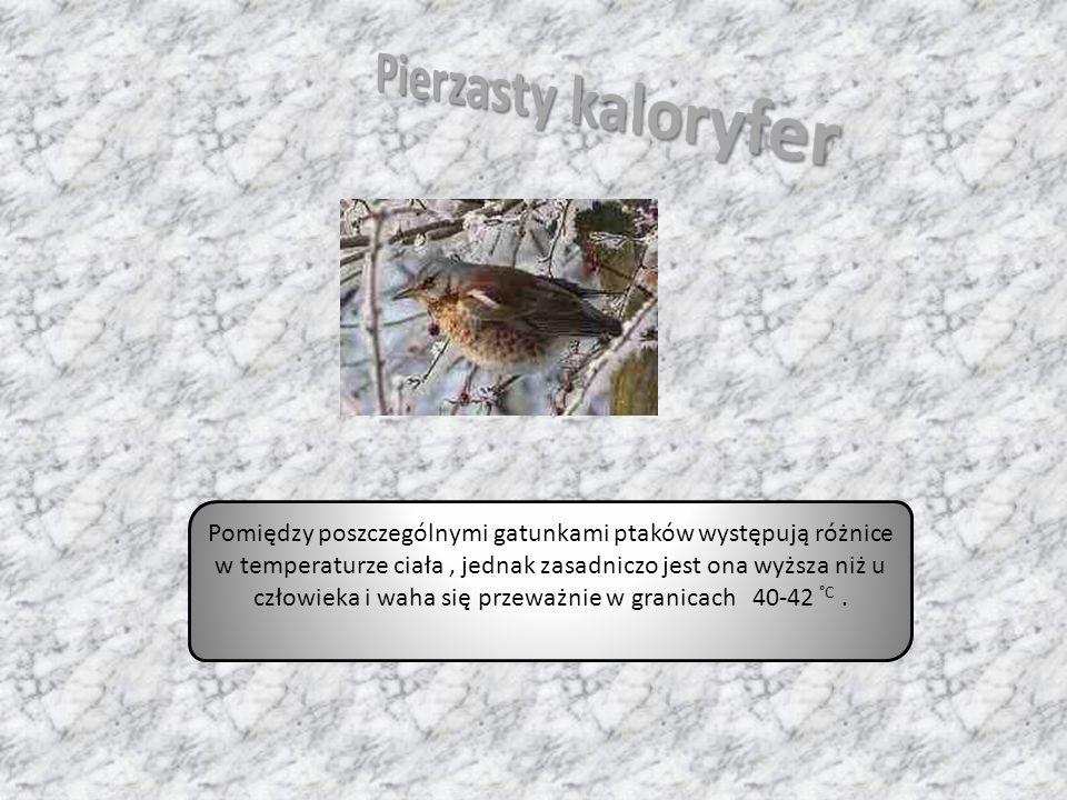 Pomiędzy poszczególnymi gatunkami ptaków występują różnice w temperaturze ciała, jednak zasadniczo jest ona wyższa niż u człowieka i waha się przeważn
