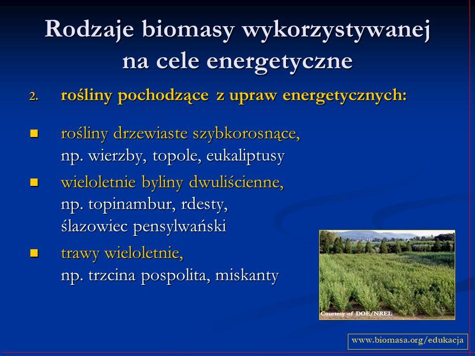 Rodzaje biomasy wykorzystywanej na cele energetyczne 2. rośliny pochodzące z upraw energetycznych: rośliny drzewiaste szybkorosnące, np. wierzby, topo