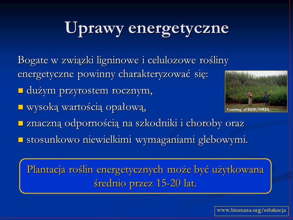 Uprawy energetyczne Bogate w związki ligninowe i celulozowe rośliny energetyczne powinny charakteryzować się: dużym przyrostem rocznym, dużym przyrost