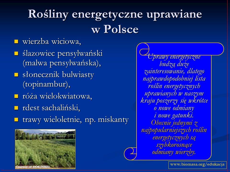 Rośliny energetyczne uprawiane w Polsce wierzba wiciowa, wierzba wiciowa, ślazowiec pensylwański (malwa pensylwańska), ślazowiec pensylwański (malwa pensylwańska), słonecznik bulwiasty (topinambur), słonecznik bulwiasty (topinambur), róża wielokwiatowa, róża wielokwiatowa, rdest sachaliński, rdest sachaliński, trawy wieloletnie, np.