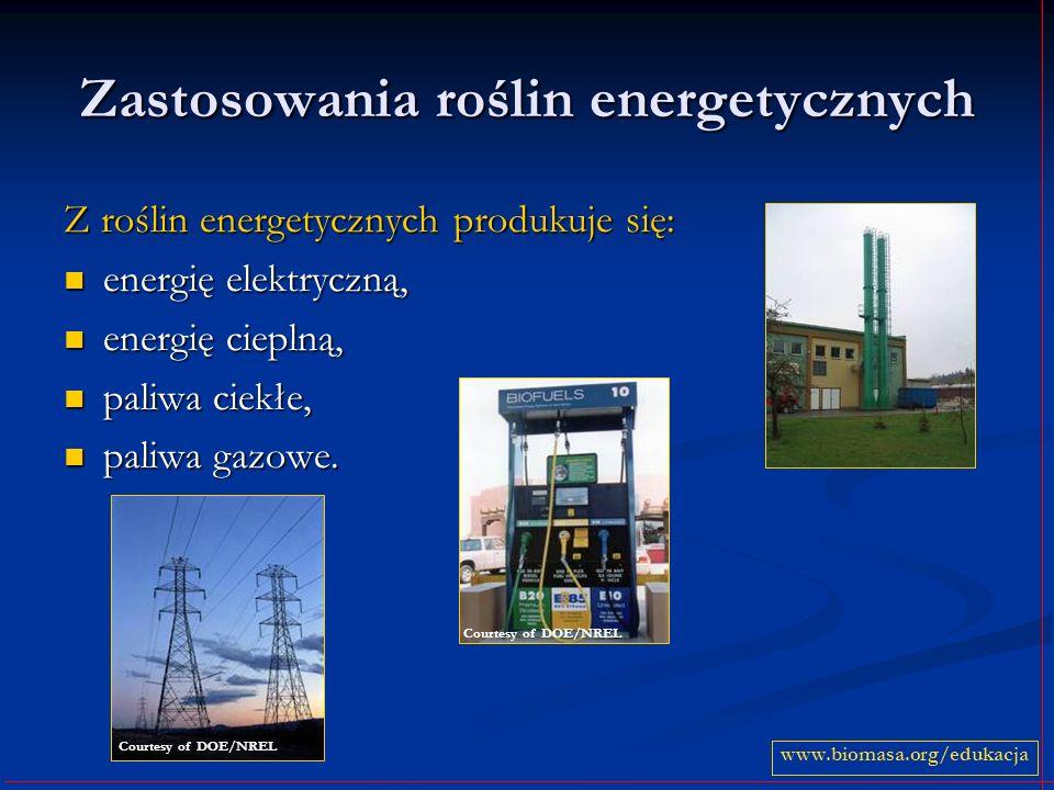 Zastosowania roślin energetycznych Z roślin energetycznych produkuje się: energię elektryczną, energię elektryczną, energię cieplną, energię cieplną,