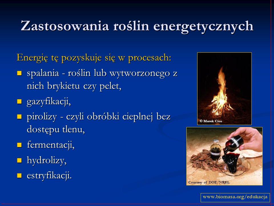 Zastosowania roślin energetycznych Energię tę pozyskuje się w procesach: spalania - roślin lub wytworzonego z nich brykietu czy pelet, spalania - rośl