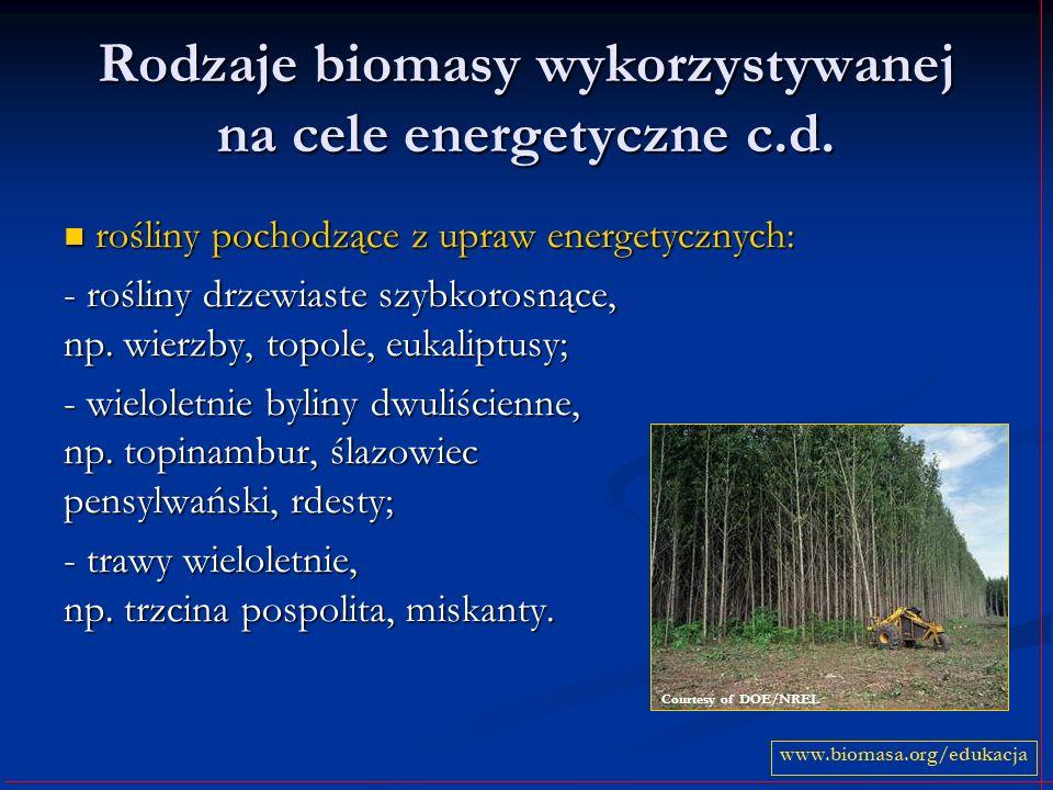 Rodzaje biomasy wykorzystywanej na cele energetyczne c.d. rośliny pochodzące z upraw energetycznych: rośliny pochodzące z upraw energetycznych: - rośl