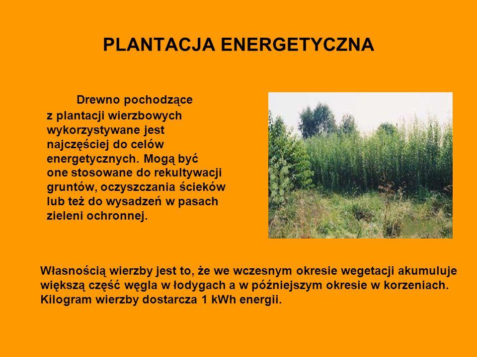 PLANTACJA ENERGETYCZNA Drewno pochodzące z plantacji wierzbowych wykorzystywane jest najczęściej do celów energetycznych.