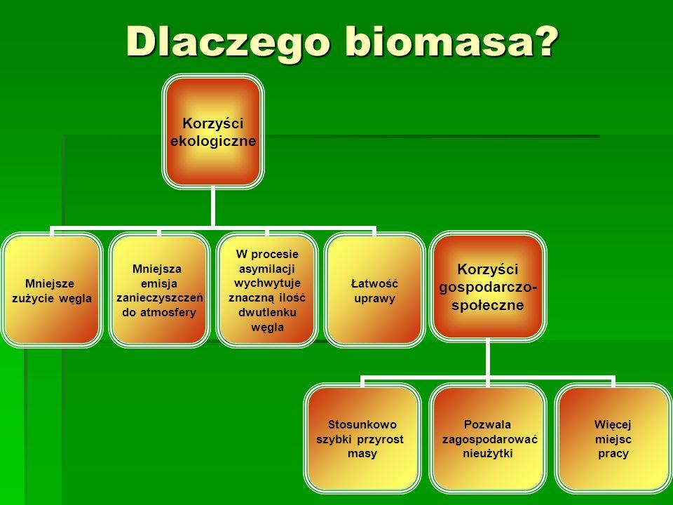 Korzyści gospodarczo- społeczne Stosunkowo szybki przyrost masy Pozwala zagospodarować nieużytki Więcej miejsc pracy Dlaczego biomasa? Korzyści ekolog