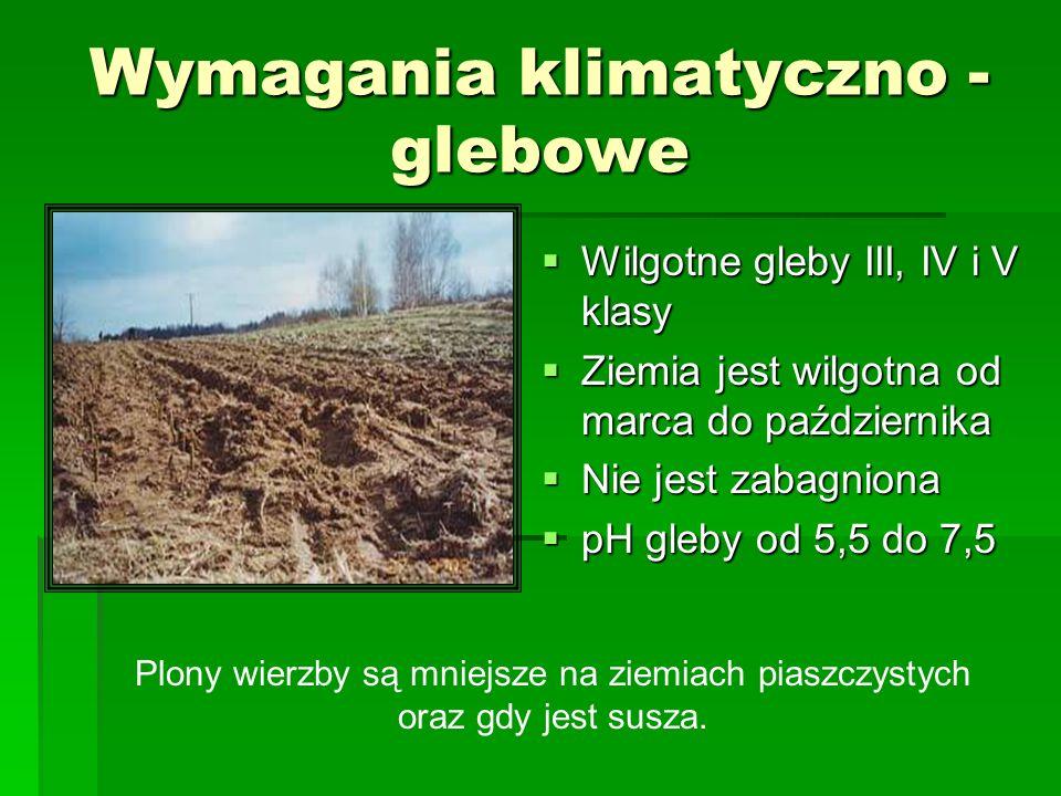 Wymagania klimatyczno - glebowe Wilgotne gleby III, IV i V klasy Wilgotne gleby III, IV i V klasy Ziemia jest wilgotna od marca do października Ziemia