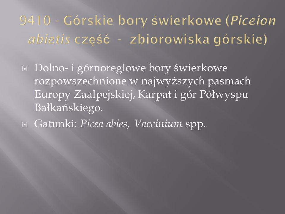 Dolno- i górnoreglowe bory świerkowe rozpowszechnione w najwyższych pasmach Europy Zaalpejskiej, Karpat i gór Półwyspu Bałkańskiego. Gatunki: Picea ab