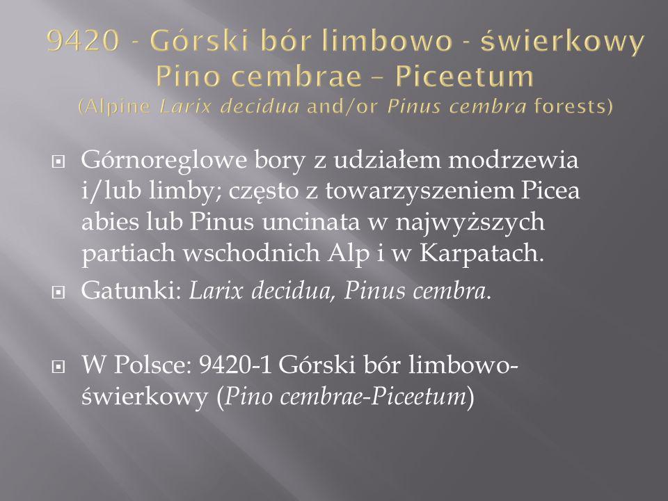 Górnoreglowe bory z udziałem modrzewia i/lub limby; często z towarzyszeniem Picea abies lub Pinus uncinata w najwyższych partiach wschodnich Alp i w K