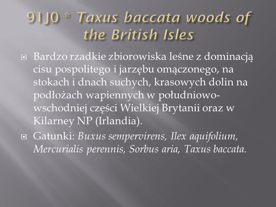 9410-1 Acidofilne bory górnoreglowe ( Calamagrostio villosae-Piceetum, Plagothecio- Piceetum ) 9410-2 Nawapienna świerczyna górnoreglowa ( Polysticho-Piceetum ) 9410-3 Dolnoreglowy bór mieszany ( Abieti- Piceetum )