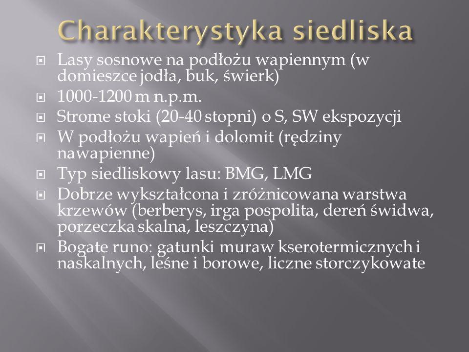 Lasy sosnowe na podłożu wapiennym (w domieszce jodła, buk, świerk) 1000-1200 m n.p.m. Strome stoki (20-40 stopni) o S, SW ekspozycji W podłożu wapień