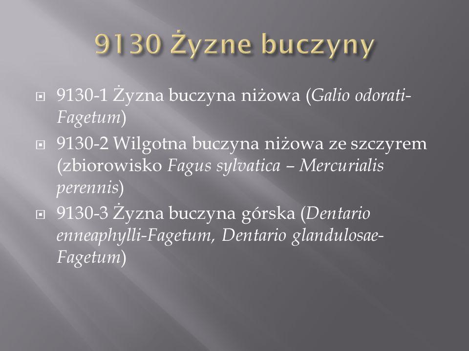 9130-1 Żyzna buczyna niżowa ( Galio odorati- Fagetum ) 9130-2 Wilgotna buczyna niżowa ze szczyrem (zbiorowisko Fagus sylvatica – Mercurialis perennis ) 9130-3 Żyzna buczyna górska ( Dentario enneaphylli-Fagetum, Dentario glandulosae- Fagetum )
