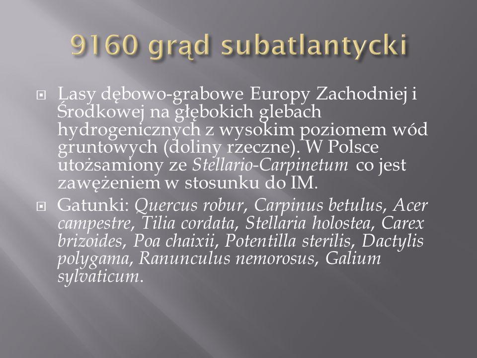 Lasy dębowo-grabowe Europy Zachodniej i Środkowej na głębokich glebach hydrogenicznych z wysokim poziomem wód gruntowych (doliny rzeczne).