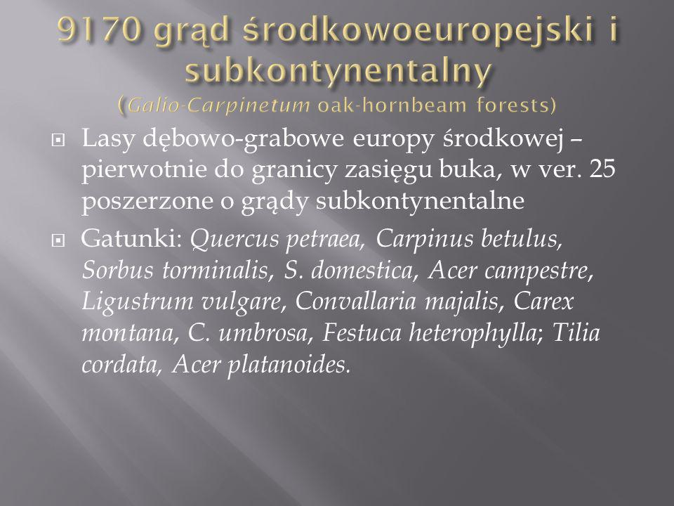 Lasy dębowo-grabowe europy środkowej – pierwotnie do granicy zasięgu buka, w ver.