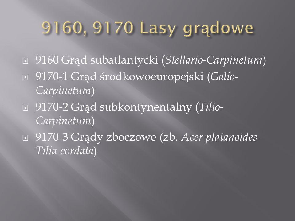 9160 Grąd subatlantycki ( Stellario-Carpinetum ) 9170-1 Grąd środkowoeuropejski ( Galio- Carpinetum ) 9170-2 Grąd subkontynentalny ( Tilio- Carpinetum ) 9170-3 Grądy zboczowe (zb.