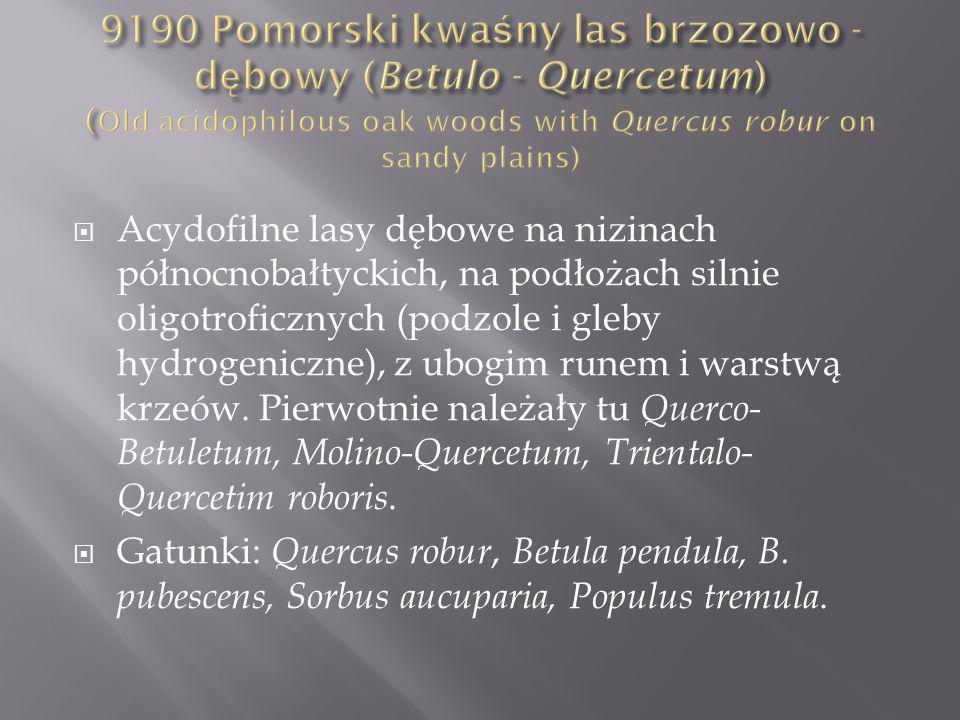 Acydofilne lasy dębowe na nizinach północnobałtyckich, na podłożach silnie oligotroficznych (podzole i gleby hydrogeniczne), z ubogim runem i warstwą krzeów.