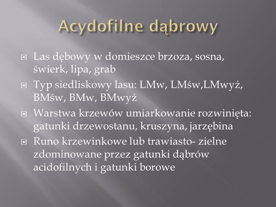 Las dębowy w domieszce brzoza, sosna, świerk, lipa, grab Typ siedliskowy lasu: LMw, LMśw,LMwyż, BMśw, BMw, BMwyż Warstwa krzewów umiarkowanie rozwinięta: gatunki drzewostanu, kruszyna, jarzębina Runo krzewinkowe lub trawiasto- zielne zdominowane przez gatunki dąbrów acidofilnych i gatunki borowe