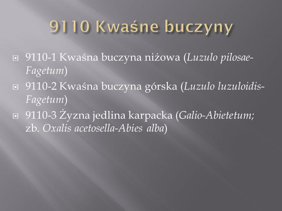 9110-1 Kwaśna buczyna niżowa ( Luzulo pilosae- Fagetum ) 9110-2 Kwaśna buczyna górska ( Luzulo luzuloidis- Fagetum ) 9110-3 Żyzna jedlina karpacka ( Galio-Abietetum; zb.