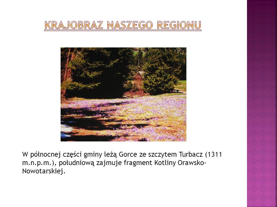 W północnej części gminy leżą Gorce ze szczytem Turbacz (1311 m.n.p.m.), południową zajmuje fragment Kotliny Orawsko- Nowotarskiej.