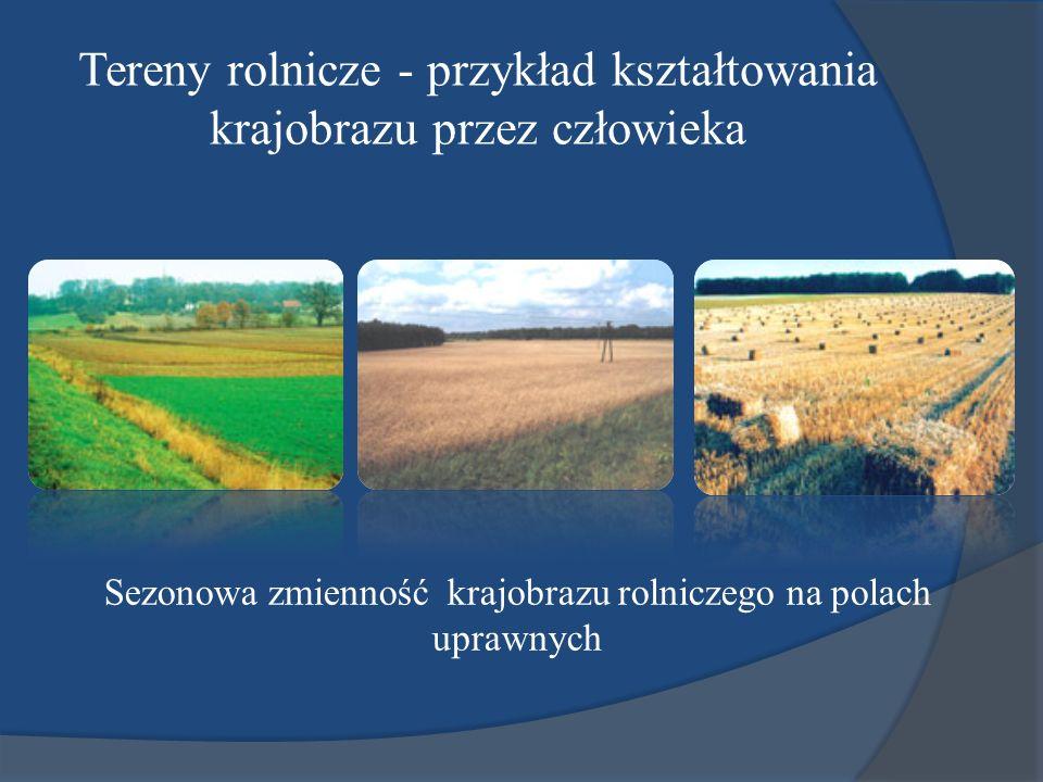 Tereny rolnicze - przykład kształtowania krajobrazu przez człowieka Sezonowa zmienność krajobrazu rolniczego na polach uprawnych