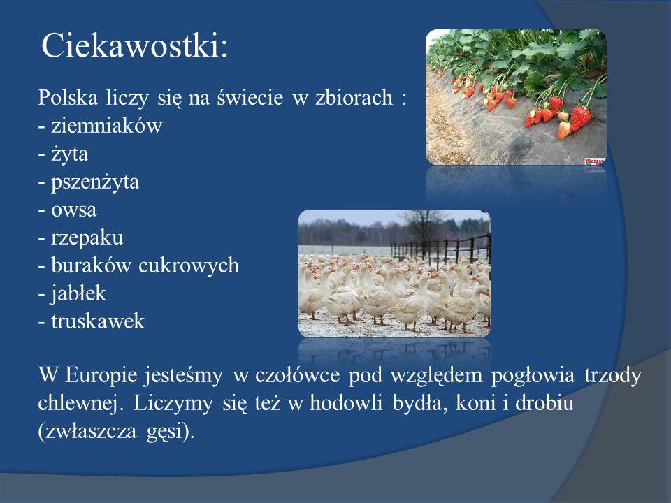 Polska liczy się na świecie w zbiorach : - ziemniaków - żyta - pszenżyta - owsa - rzepaku - buraków cukrowych - jabłek - truskawek W Europie jesteśmy