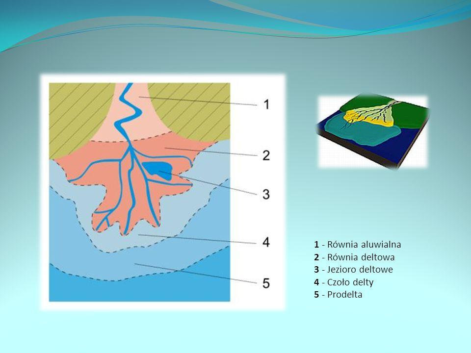 1 - Równia aluwialna 2 - Równia deltowa 3 - Jezioro deltowe 4 - Czoło delty 5 - Prodelta