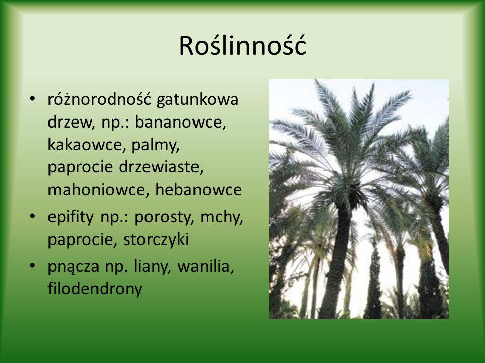 Roślinność różnorodność gatunkowa drzew, np.: bananowce, kakaowce, palmy, paprocie drzewiaste, mahoniowce, hebanowce epifity np.: porosty, mchy, papro