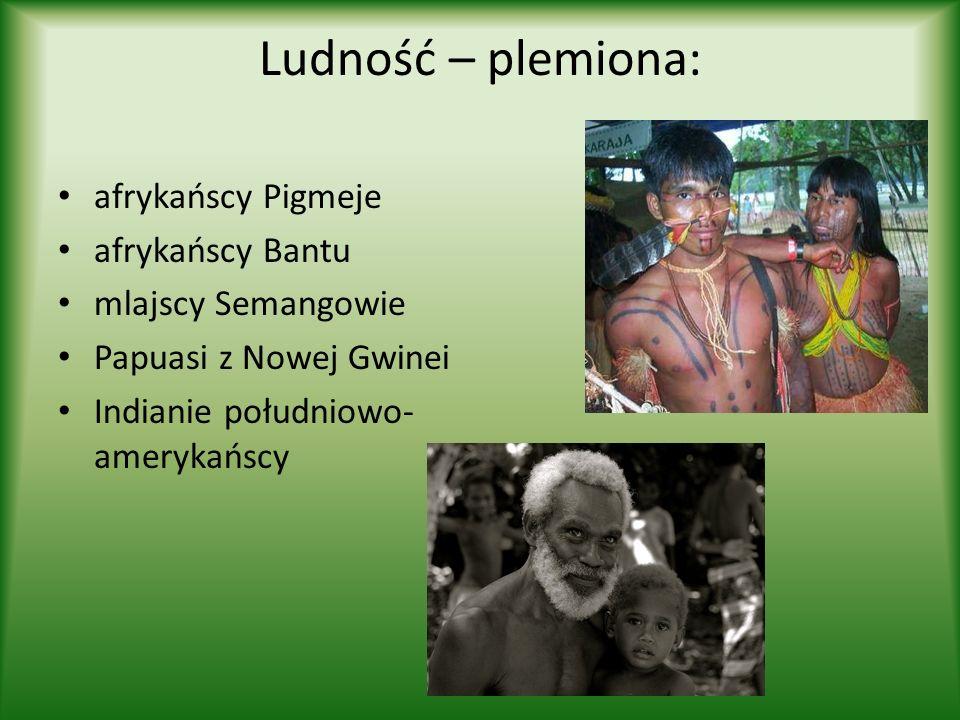 Ludność – plemiona: afrykańscy Pigmeje afrykańscy Bantu mlajscy Semangowie Papuasi z Nowej Gwinei Indianie południowo- amerykańscy
