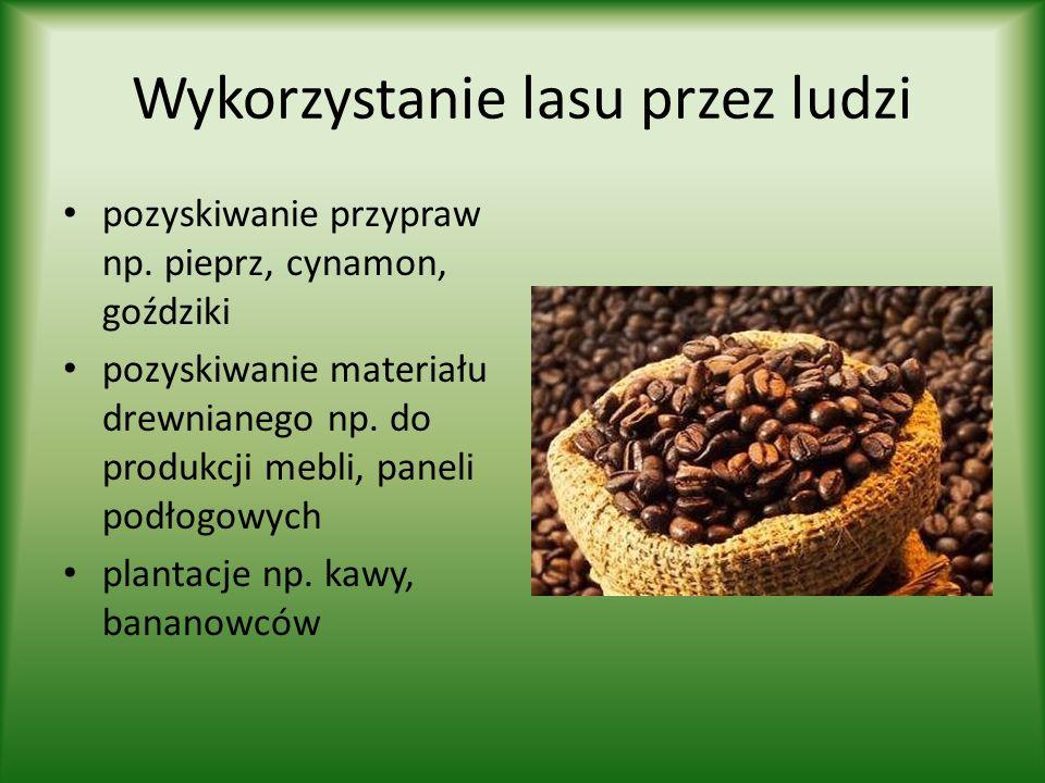 Wykorzystanie lasu przez ludzi pozyskiwanie przypraw np. pieprz, cynamon, goździki pozyskiwanie materiału drewnianego np. do produkcji mebli, paneli p