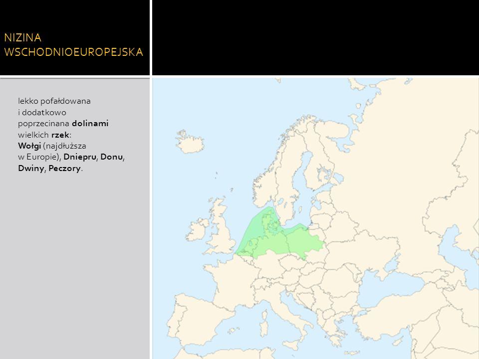 NIZINA WSCHODNIOEUROPEJSKA lekko pofałdowana i dodatkowo poprzecinana dolinami wielkich rzek: Wołgi (najdłuższa w Europie), Dniepru, Donu, Dwiny, Pecz