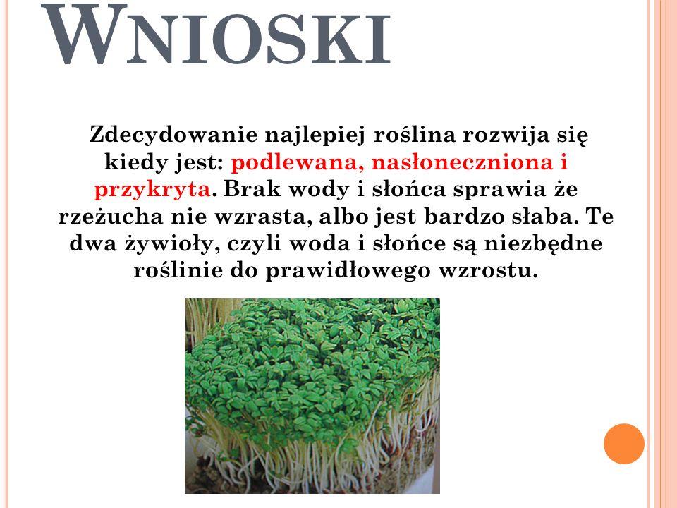 W NIOSKI Zdecydowanie najlepiej roślina rozwija się kiedy jest: podlewana, nasłoneczniona i przykryta. Brak wody i słońca sprawia że rzeżucha nie wzra