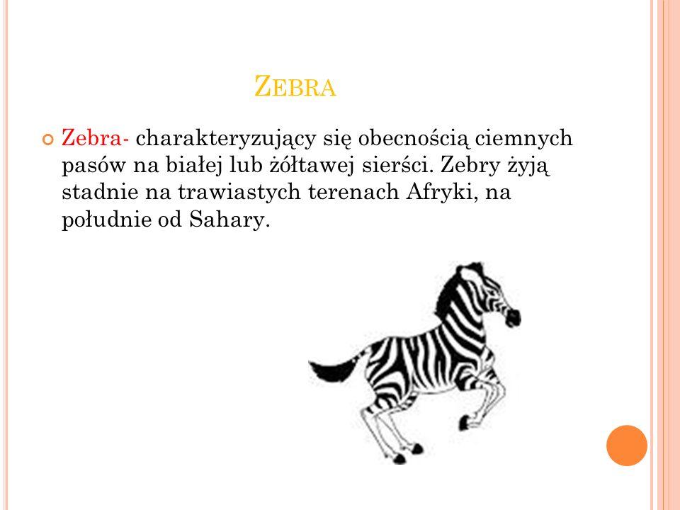 Z EBRA Zebra- charakteryzujący się obecnością ciemnych pasów na białej lub żółtawej sierści.