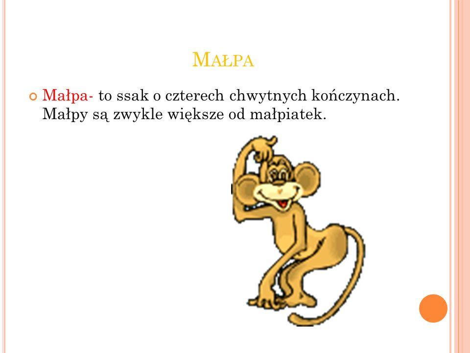 M AŁPA Małpa- to ssak o czterech chwytnych kończynach. Małpy są zwykle większe od małpiatek.