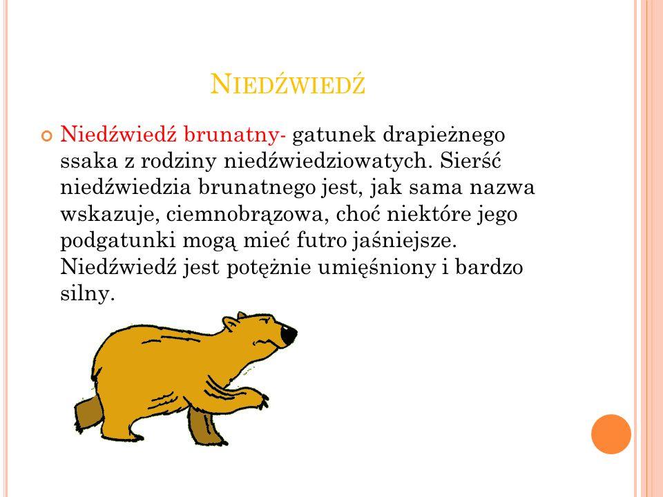 N IEDŹWIEDŹ Niedźwiedź brunatny- gatunek drapieżnego ssaka z rodziny niedźwiedziowatych.