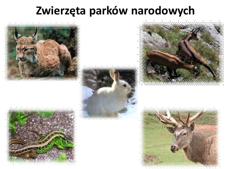 Zwierzęta parków narodowych